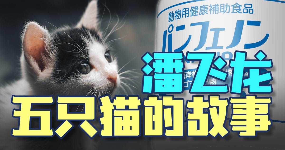 五只猫的故事