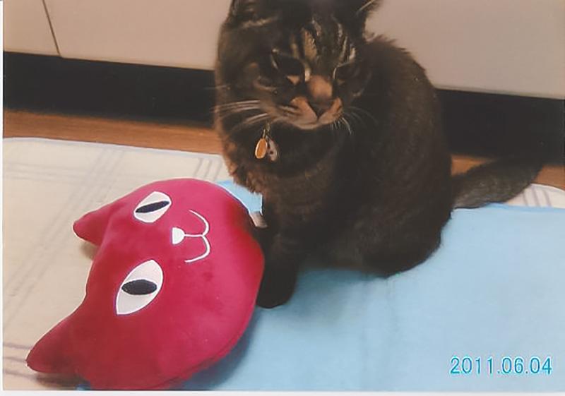 患有肾脏癌的猫咪SHAKE复活了03