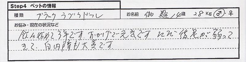 横山新司 伽罗.jpg