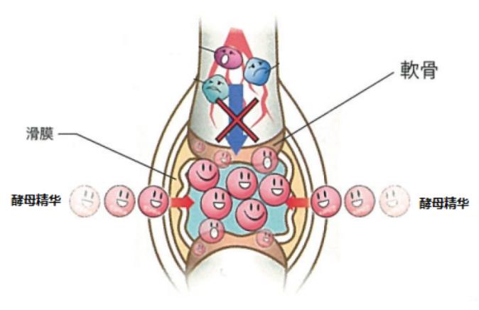 葡萄糖胺插图